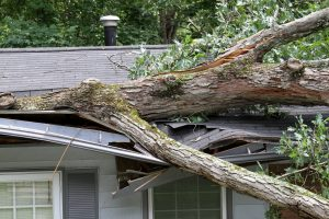 Picture of a tree that fell on a roof during a storm.